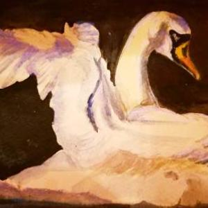 swans Art Competition