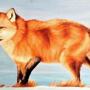 Fox Wildlife Contest Art Competition