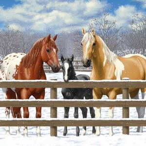 Horses With Spots - Pintos and Appaloosas Art Competition