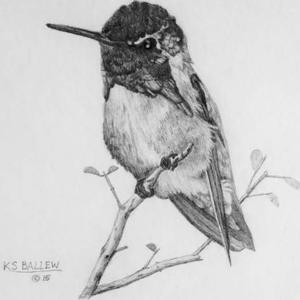 Just Drawing Perched Birds Art Competition