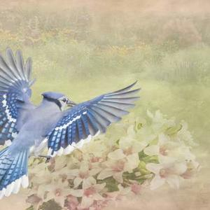 Photos Avian Composite Art Art Competition