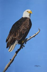 Bald Eagle Accepted By New England Watercolor Society